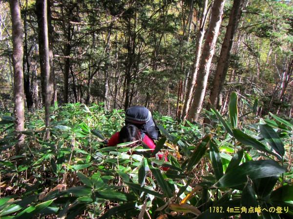 藪漕ぎ1782.4mpへの登り