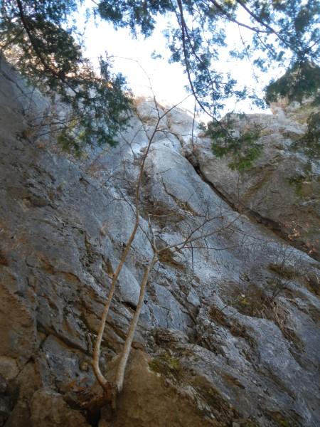 二子山中央稜 014